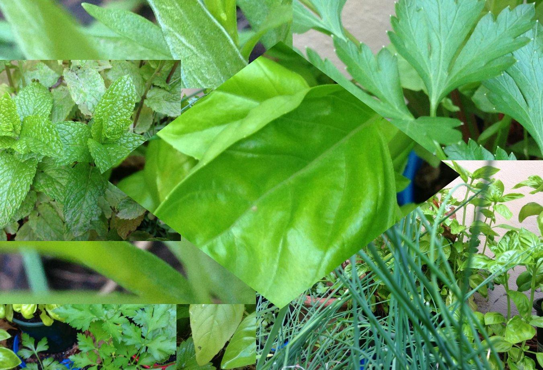 Green sauces - Basil b