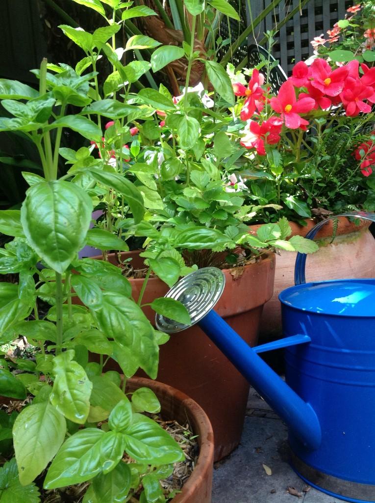 Herb Garden - Other
