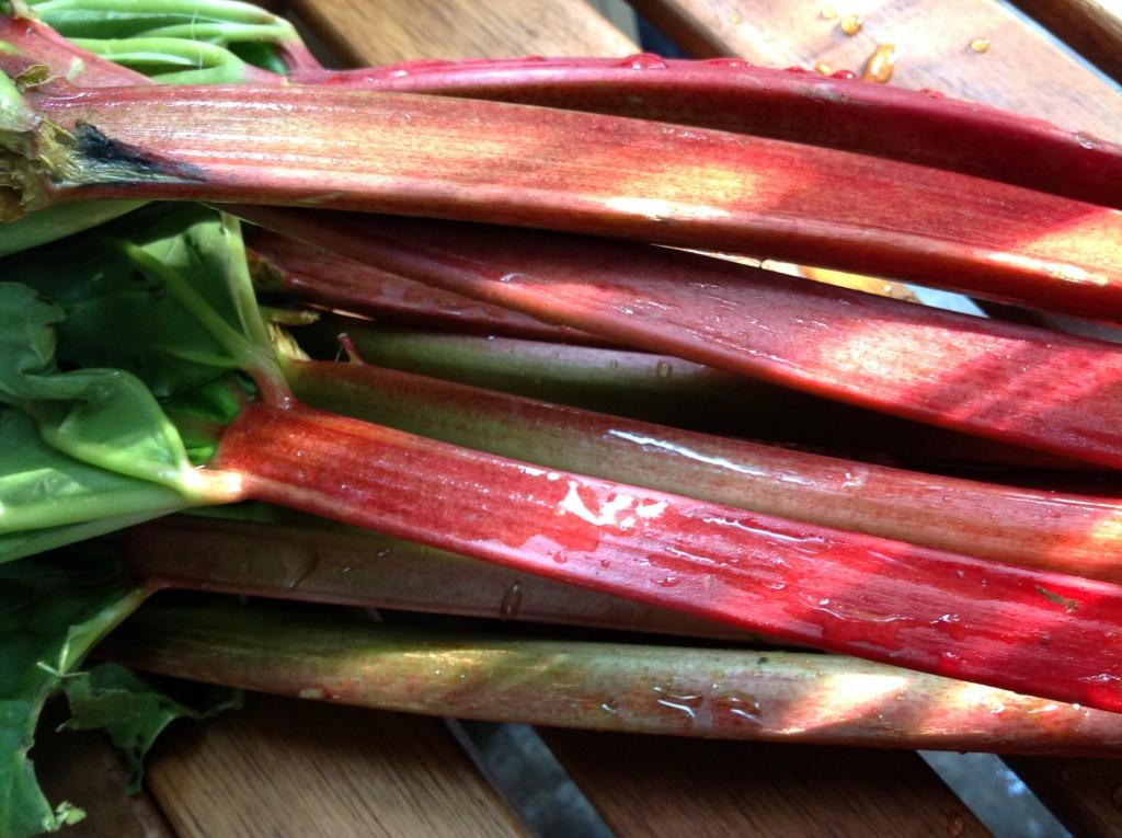 Rhubarb fool - aa